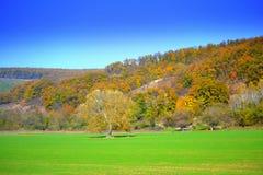 Jaskrawy - zielony śródpolny jesień lasu widok Fotografia Royalty Free