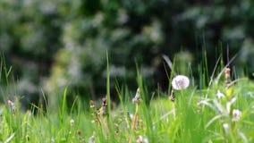 Jaskrawy - zielony mosiądz zbiory wideo