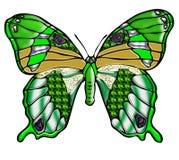 Jaskrawy - zielony motyl Zdjęcie Royalty Free