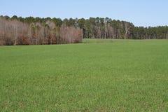 Jaskrawy - zielony Rolny pole Zdjęcia Stock