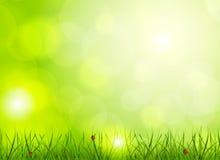 Jaskrawy - zielony tło Fotografia Stock