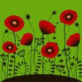 Jaskrawy - zielony tło z czerwonymi maczkami Obrazy Stock