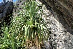 Jaskrawy - zielony tropikalny tropikalny las deszczowy Palawan wyspa Obraz Royalty Free