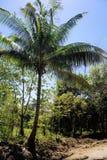 Jaskrawy - zielony tropikalny tropikalny las deszczowy Palawan wyspa Zdjęcie Royalty Free