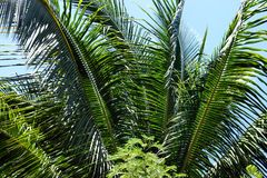 Jaskrawy - zielony tropikalny tropikalny las deszczowy Palawan wyspa Obrazy Royalty Free