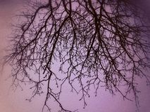 Jaskrawy zimy błękita jasnego niebo Obrazy Stock