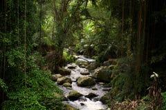jaskrawy zwartej mgły lasowego wysokiego ilustracyjnego dżungli warstwy ilości rzecznego zmierzchu super cienka unikalna woda Obrazy Stock