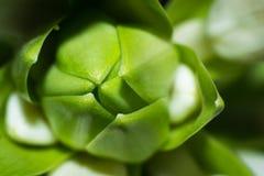 Jaskrawych kwiatów makro- fotografia Zdjęcie Royalty Free