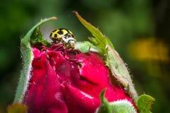 Jaskrawych kwiatów makro- fotografia Zdjęcia Stock