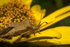 Jaskrawych kwiatów makro- fotografia Zdjęcie Stock