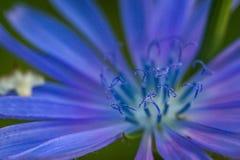 Jaskrawych kwiatów makro- fotografia Fotografia Stock