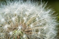 Jaskrawych kwiatów makro- fotografia Zdjęcia Royalty Free