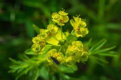 Jaskrawych kwiatów makro- fotografia Obraz Stock