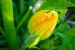 Jaskrawych kwiatów makro- fotografia Obrazy Royalty Free