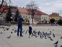 Jaslo/Polen-Maart 27.2018: Een klein meisje, die voor zijn vader, spelen met de stadsduiven zorgen in het centrale vierkant Vader royalty-vrije stock foto