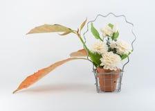 Jasmijn in Mand en Autumn Leaf royalty-vrije stock foto's