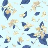 Jasmijn naadloos patroon Stock Afbeelding