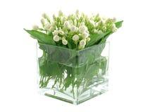 Jasmijn in vaas Stock Foto's