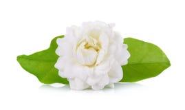Jasmijnbloem op witte achtergrond wordt geïsoleerd die Royalty-vrije Stock Afbeeldingen