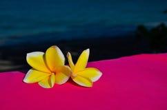 Jasmijnbloemen Royalty-vrije Stock Afbeeldingen