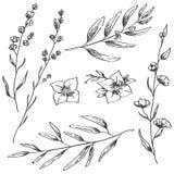 Jasmijnbloemen, lavendel en natuurlijke takkenhand getrokken schets stock illustratie