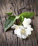 Jasmijnbloemen over oude houten lijst Stock Afbeelding