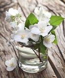 Jasmijnbloemen over oude houten lijst Stock Fotografie