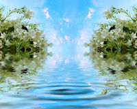 Jasmim bonito com lago celestial Foto de Stock