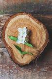 Jasmim em uma tabela de madeira Fotos de Stock Royalty Free