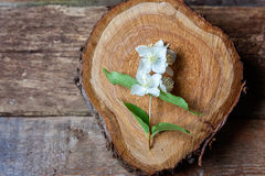 Jasmim em uma tabela de madeira Imagens de Stock Royalty Free