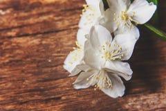 Jasmim em uma tabela de madeira Imagens de Stock