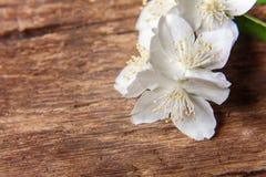 Jasmim em uma tabela de madeira Foto de Stock Royalty Free