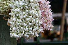 Jasmin blanc et fleur rose faits à la guirlande et à s'accorder photos stock