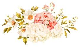 Jasmin blanc rose, hortensia, fleurs roses épousant l'aquarelle illustration libre de droits