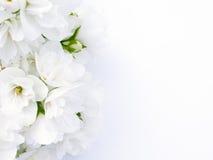 Jasmin-Blumenstrauß Stockbild