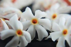 Jasmin de floraison de nuit Photographie stock