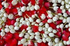 Jasmin de fond et festival de Songkran de roses Image stock