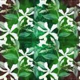 Jasmin - fleurs, bourgeons, feuilles Fond sans couture Collage des fleurs sur un fond d'aquarelle Employez les matériaux imprimés illustration libre de droits