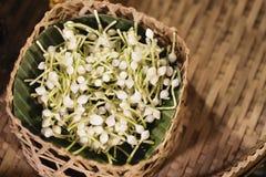 Jasmin im Korb, Blumen des arabischen Jasmins für handgemachte Girlande, Jasminmaterial für handgemachte Girlande stockfotografie