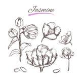 Jasmin Nahtloser Blumenhintergrund Natürliche Kräuter und Blumen Schönheit und Ayurveda Organische Kosmetik stock abbildung