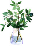 Jasmin in a vase. Watercolor illustration on a white background