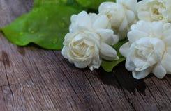 Jasminblumen und -blätter auf braunem Holztisch lizenzfreies stockfoto