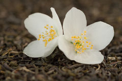 jasmine λουλουδιών τσάι Στοκ φωτογραφία με δικαίωμα ελεύθερης χρήσης