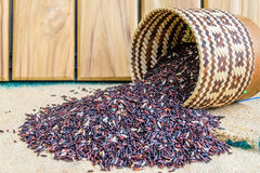 Jasmine μηδενός Hom μαύρο ρύζι στην Ταϊλάνδη Στοκ Φωτογραφίες