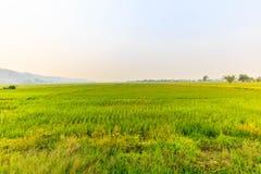 Jasmine ορυζώνα αγρόκτημα ρυζιού στην Ταϊλάνδη Στοκ εικόνα με δικαίωμα ελεύθερης χρήσης