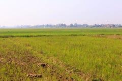 Jasmine ορυζώνα αγρόκτημα ρυζιού Στοκ εικόνες με δικαίωμα ελεύθερης χρήσης