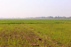 Jasmine ορυζώνα αγρόκτημα ρυζιού Στοκ Εικόνα