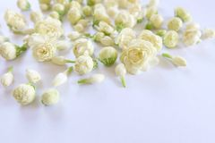 jasmine λουλουδιών διαφορών ανασκόπησης συμπαθητικό εποχιακό θέμα Στοκ Φωτογραφίες