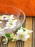 Jasmine. Series flowers: branch of fresh jasmine Royalty Free Stock Photos