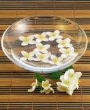 Jasmine. Series flowers: fresh jasmine in watter Royalty Free Stock Photography